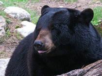 Der Garlyn Zoo in den Wäldern von Michigan © Garlyn Zoo