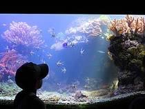 Im Aquaria Vattenmuseum © hammershaug