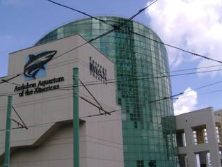 Das Audubon Aquarium of the Americas  in New Orleans © Seregelly