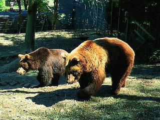 Wild- und Freizeitpark Willingen © Wild- und Freizeitpark Willingen