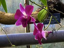 Orchideen im Botanischen Garten Bern. © nikoschwarz
