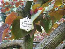 Arboretum Trompenburg © westher