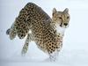 Exotische Tiere im Schneetreiben