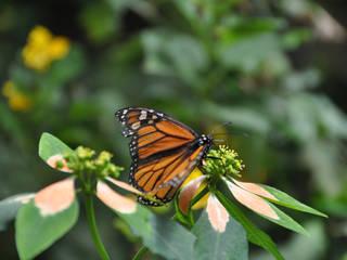 Schmetterlingsfarm Steinhude