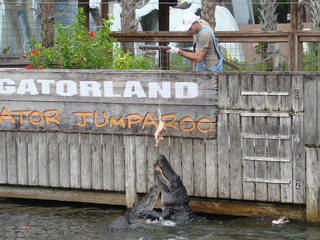 Gatorland in Orlando, Flrorida © Kissimmee - The Heart of Florida