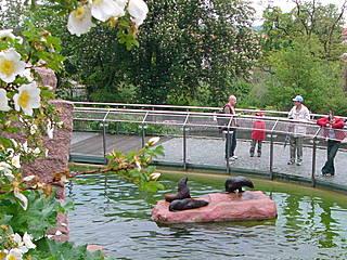Seebärenanlage © Zoologischer Garten Halle