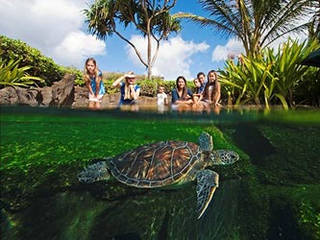 Maui Ocean Center  © Maui Ocean Center
